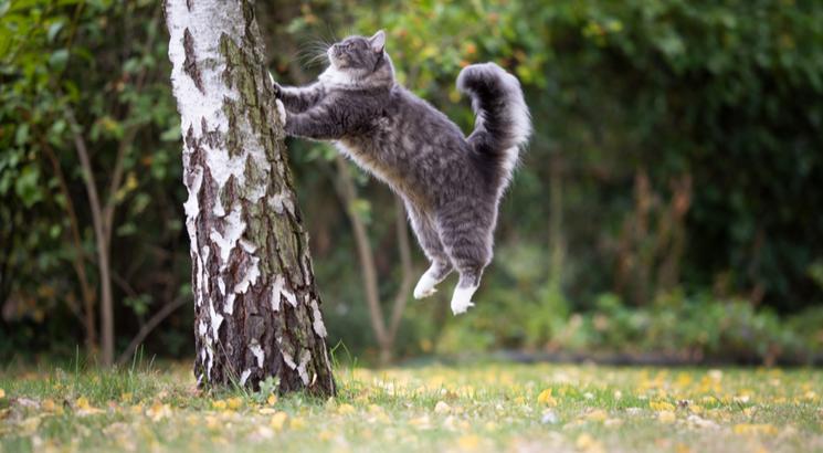 dead cat bounce - dead cat bounce trading - illustration chat grimpe arbre