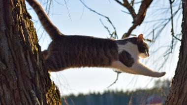dead cat bounce - dead cat bounce trading - illustration saut chat arbre