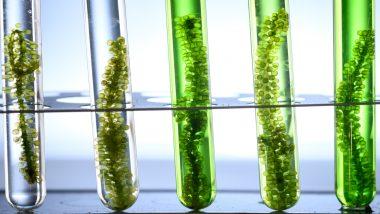 investir dans la biotechnologie - action biotechnologie bourse - illustration éprouvettes algues